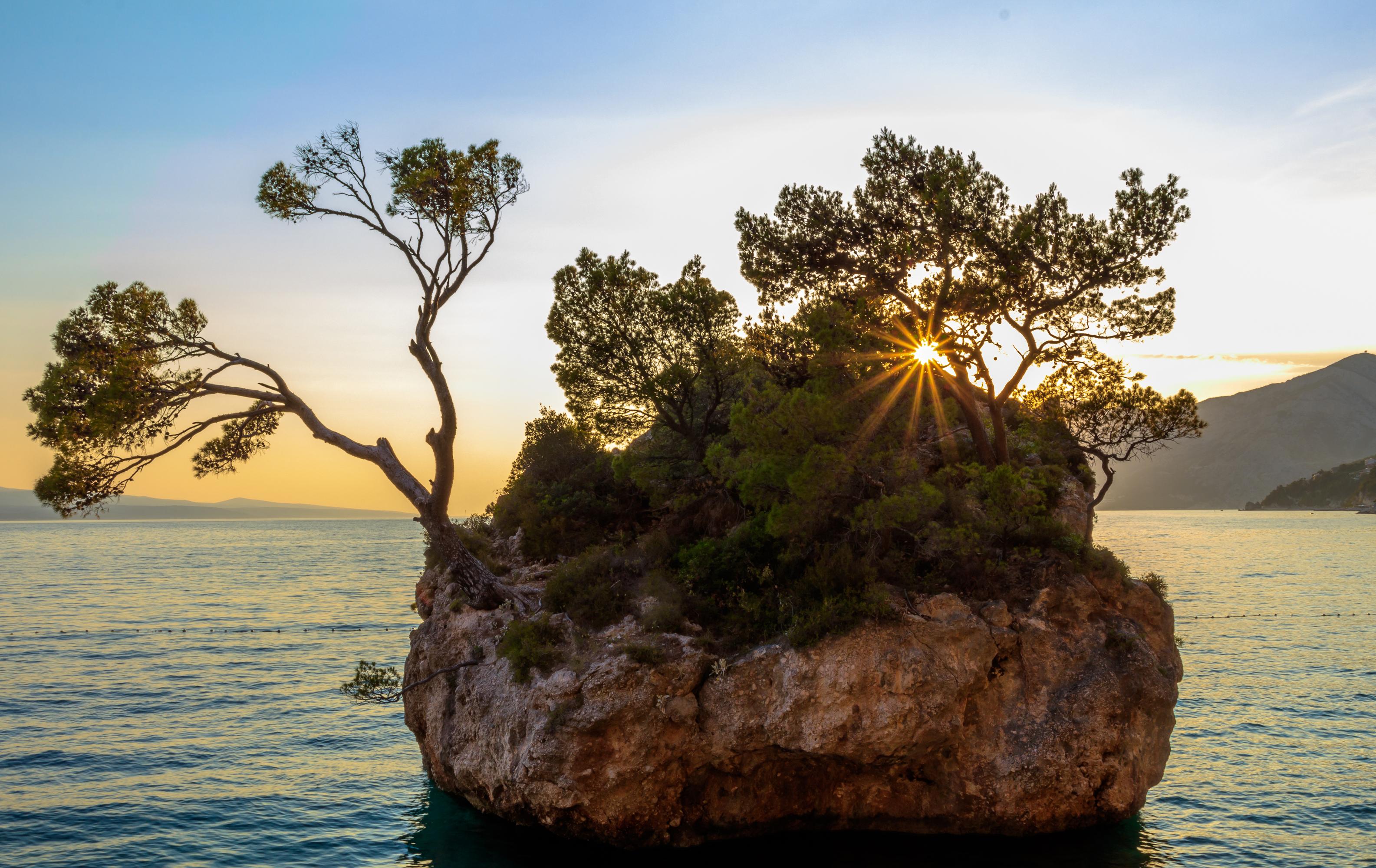 признается подольская, дерево в скале картинки есть