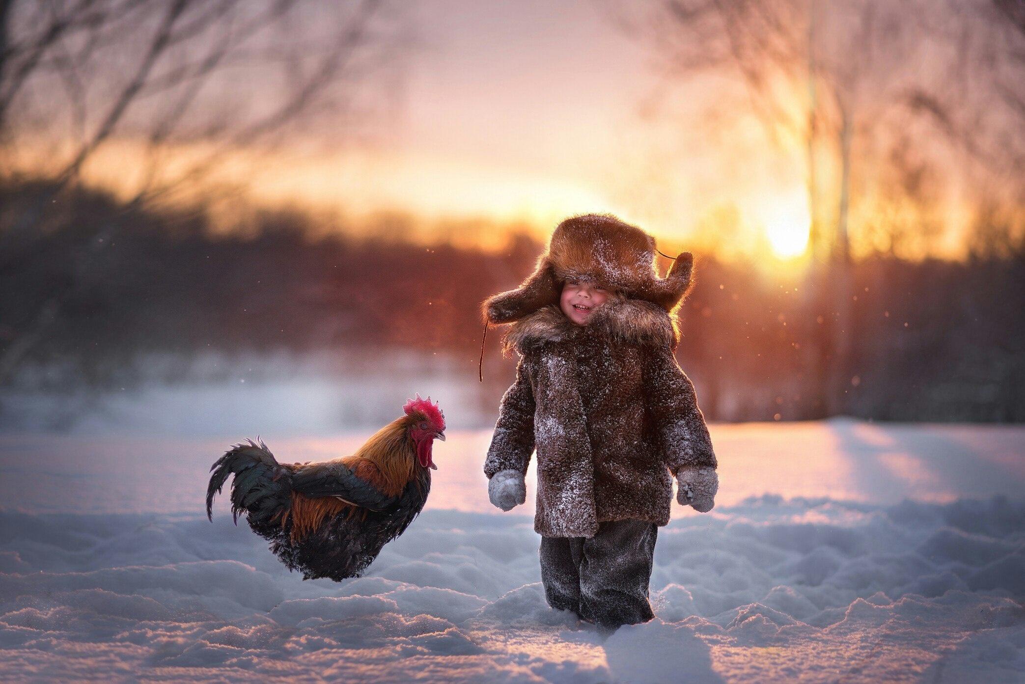Картинки с петухом зимой