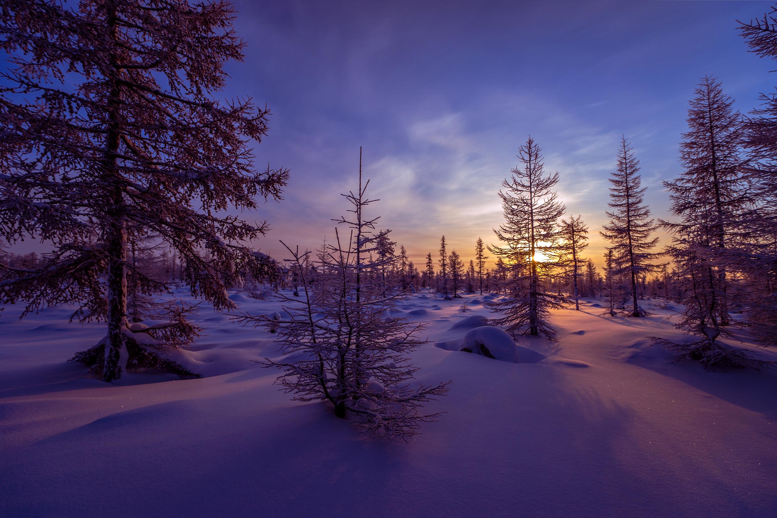 просто зимний вечер лес фото входные