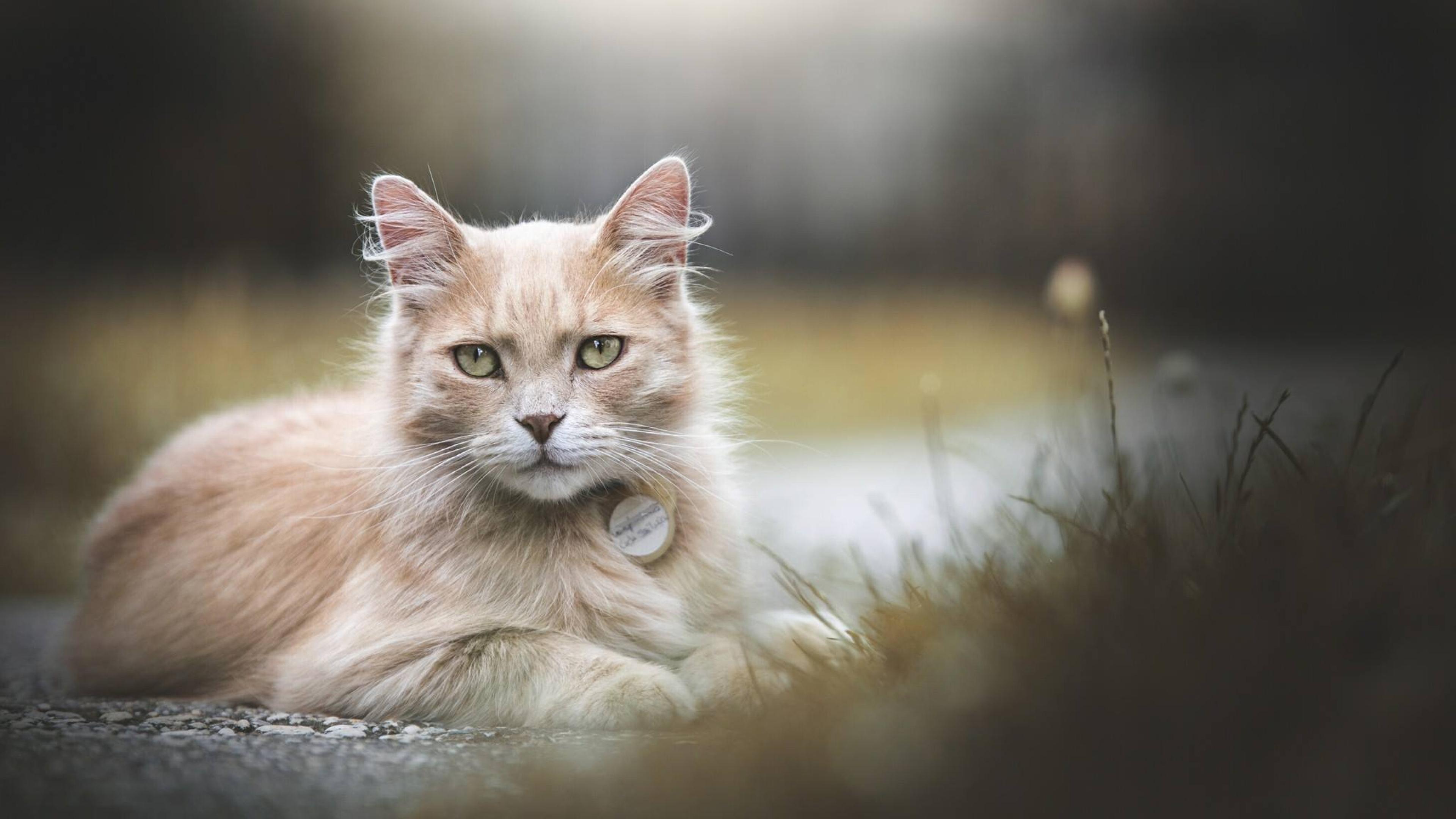 https://www.zastavki.com/pictures/originals/2019Animals___Cats_Ginger_green-eyed_cat_lying_on_the_ground_133833_.jpg