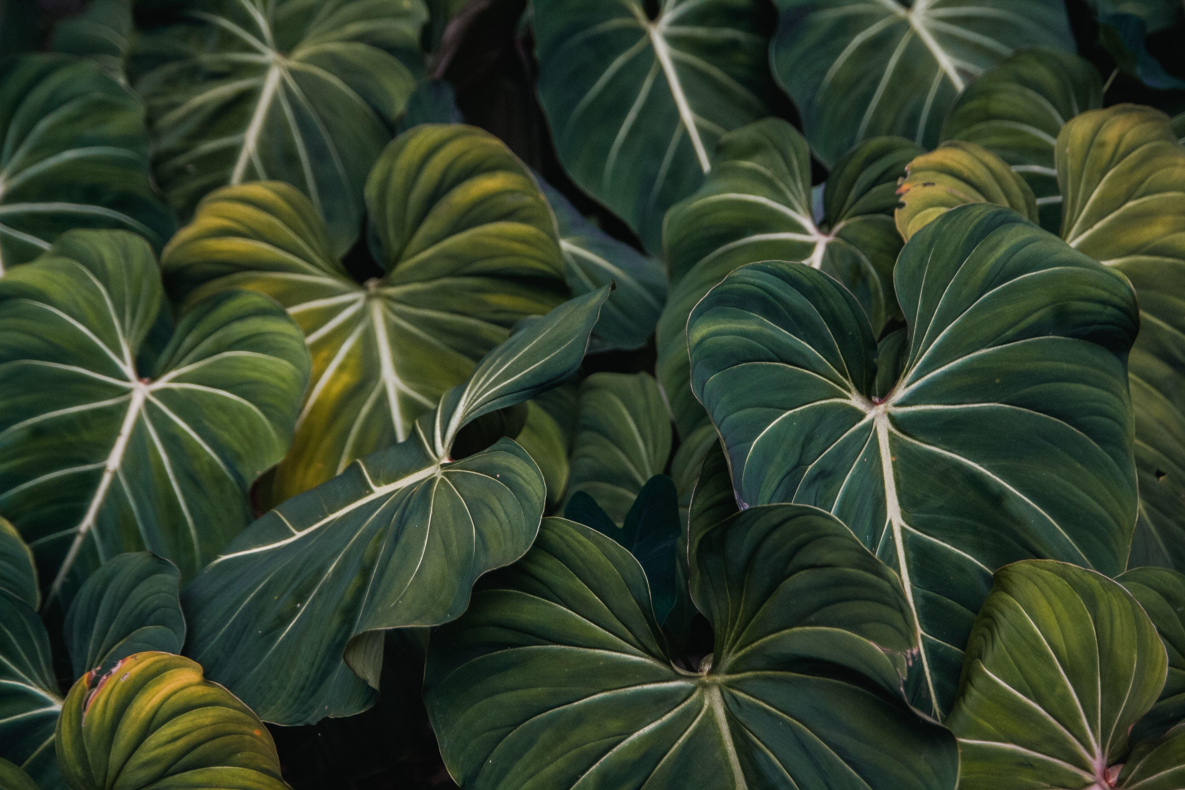 Картинки большие листья цветов