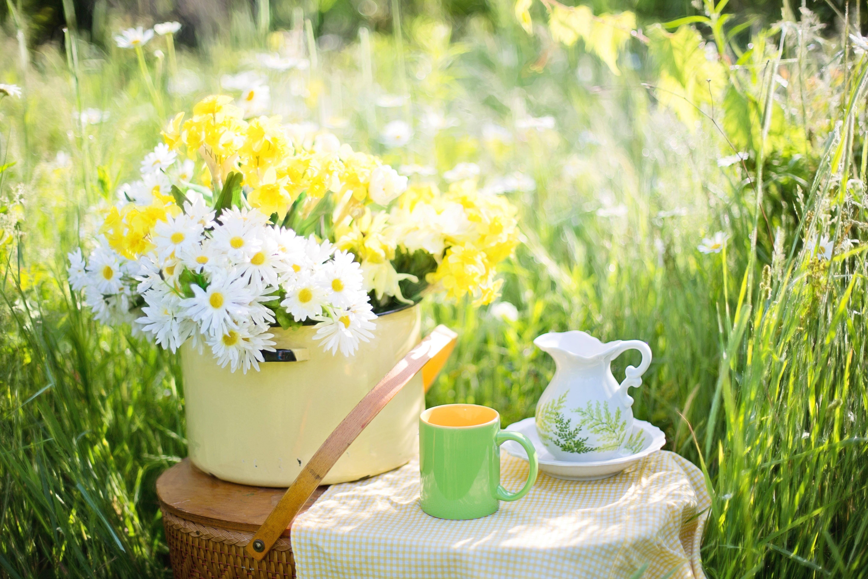 Картинка доброе летнее утро красивые