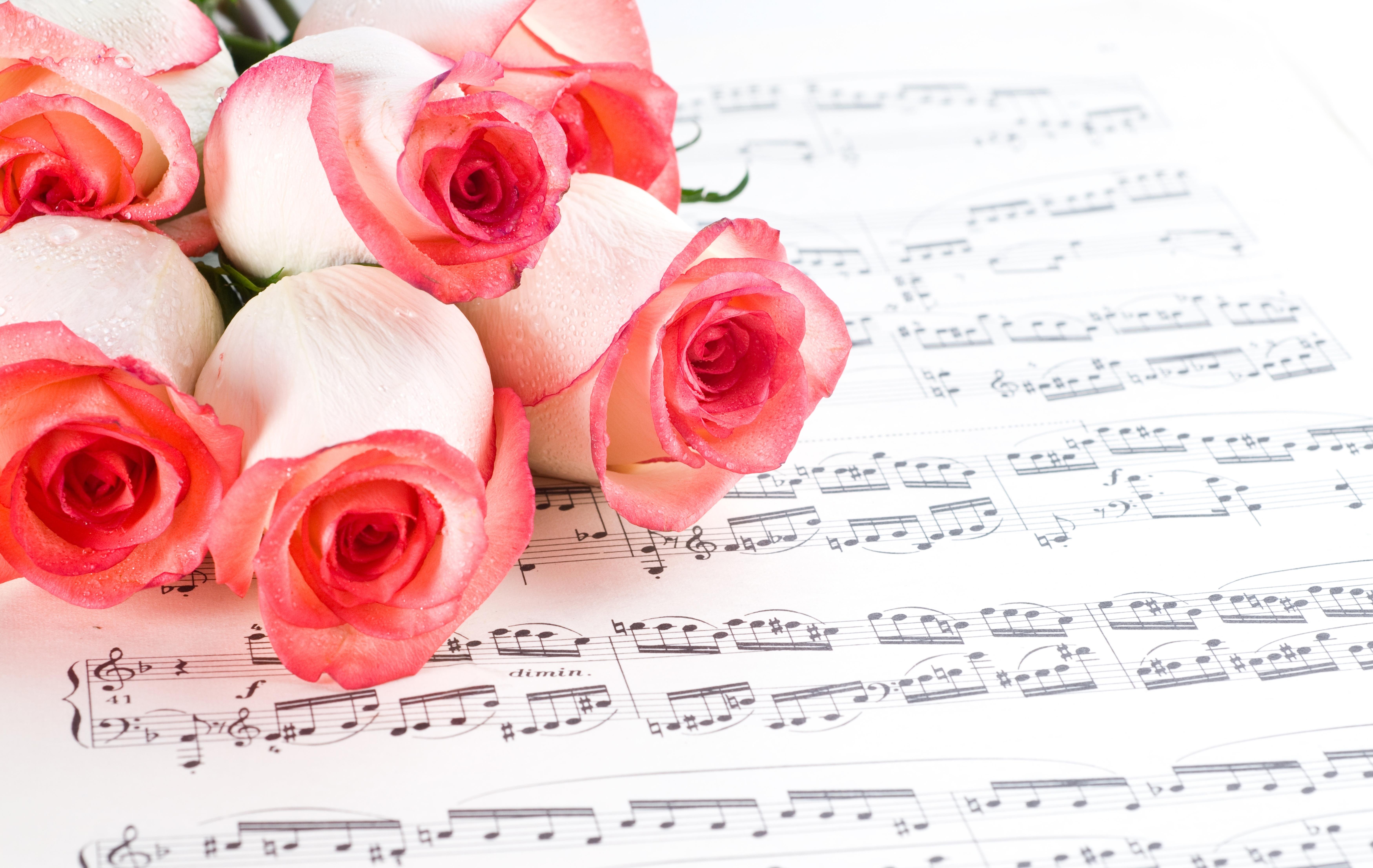 Открытки с живыми цветами музыкальные, днем рождения мужчине