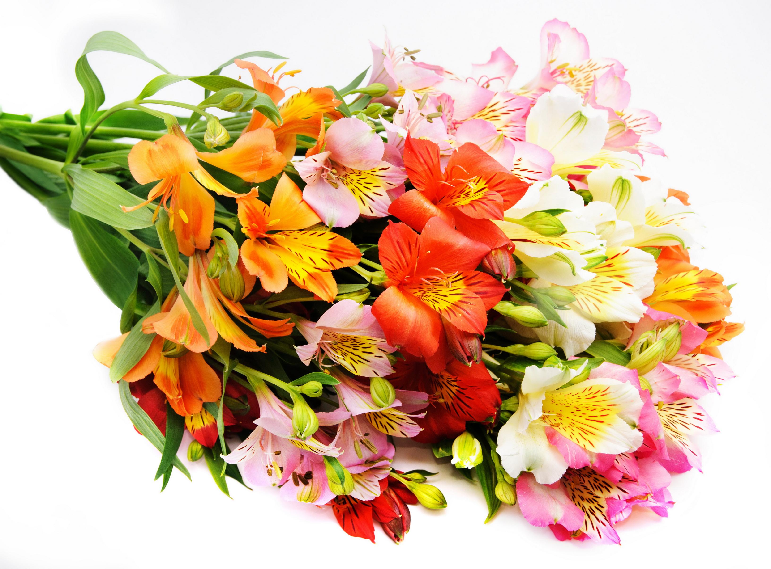 Фото красивые цветы букеты, картинки девушки