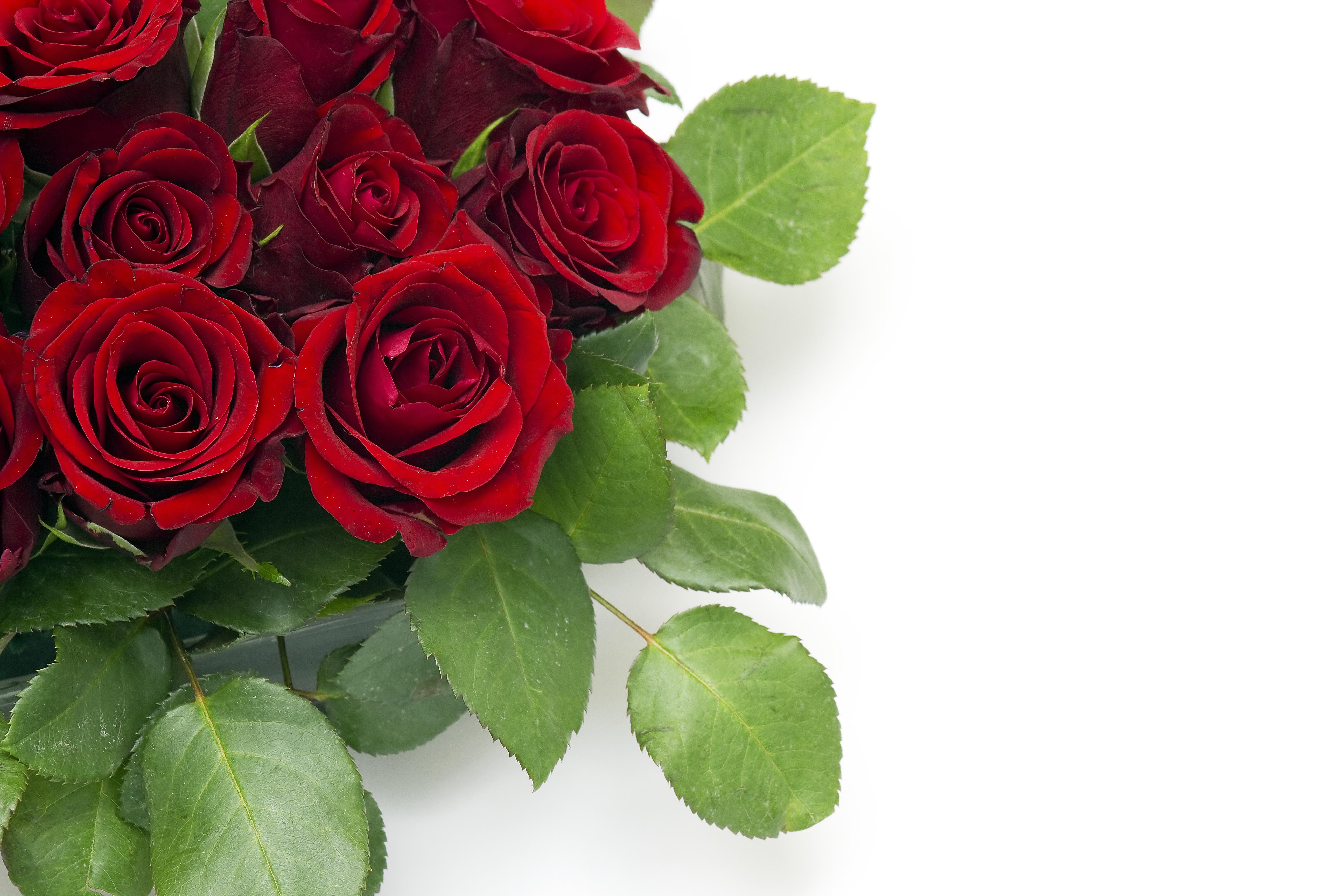 Открытка для, розы красные открытки