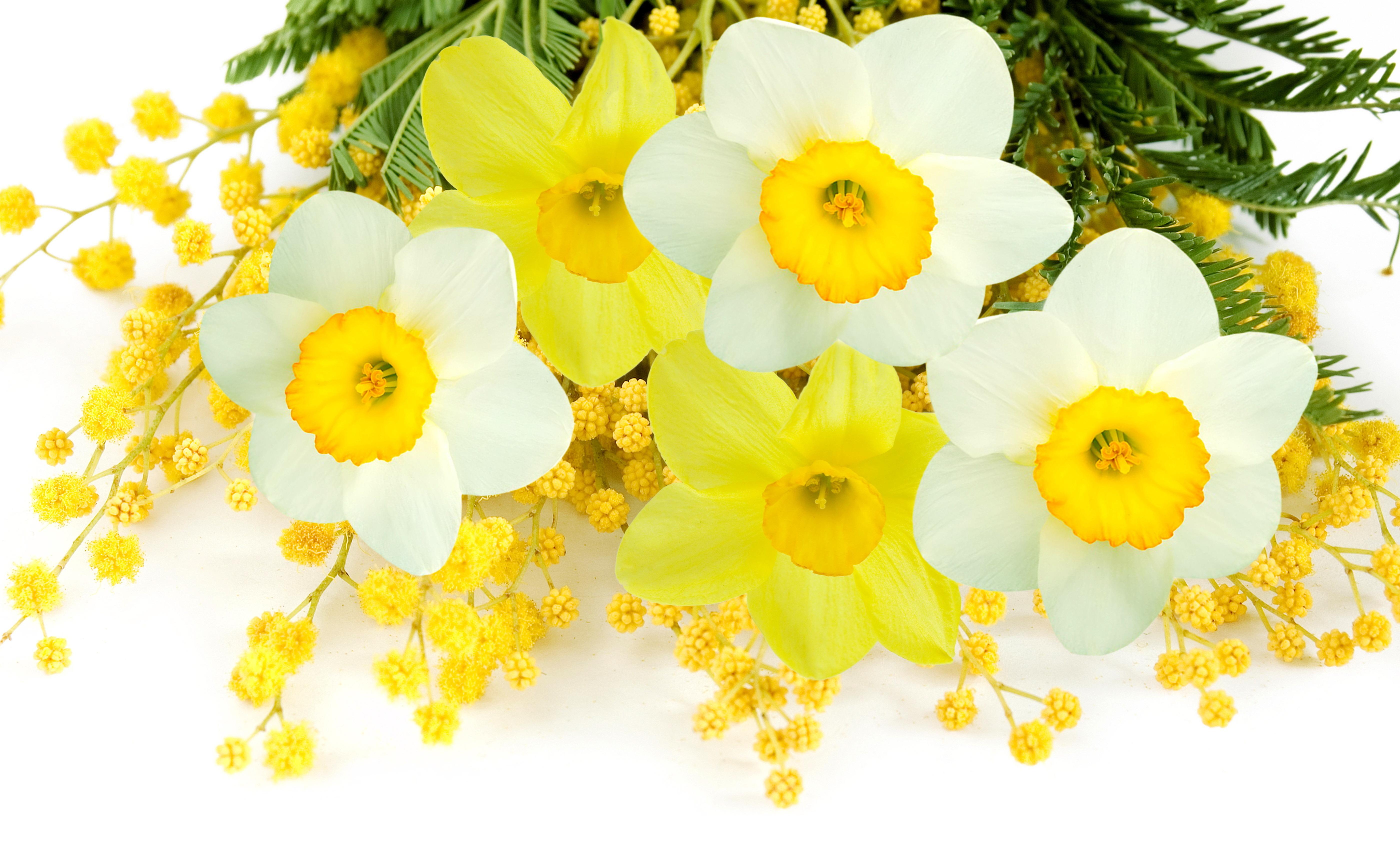 Открытка к 8 марта цветы нарциссы, матершинная картинка