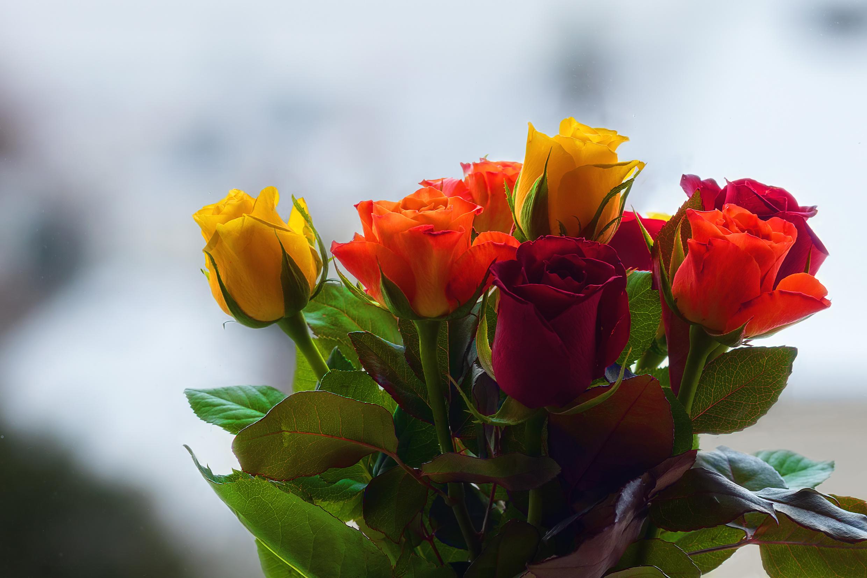 букет цветов в картинках роз на рабочем столе минувшую