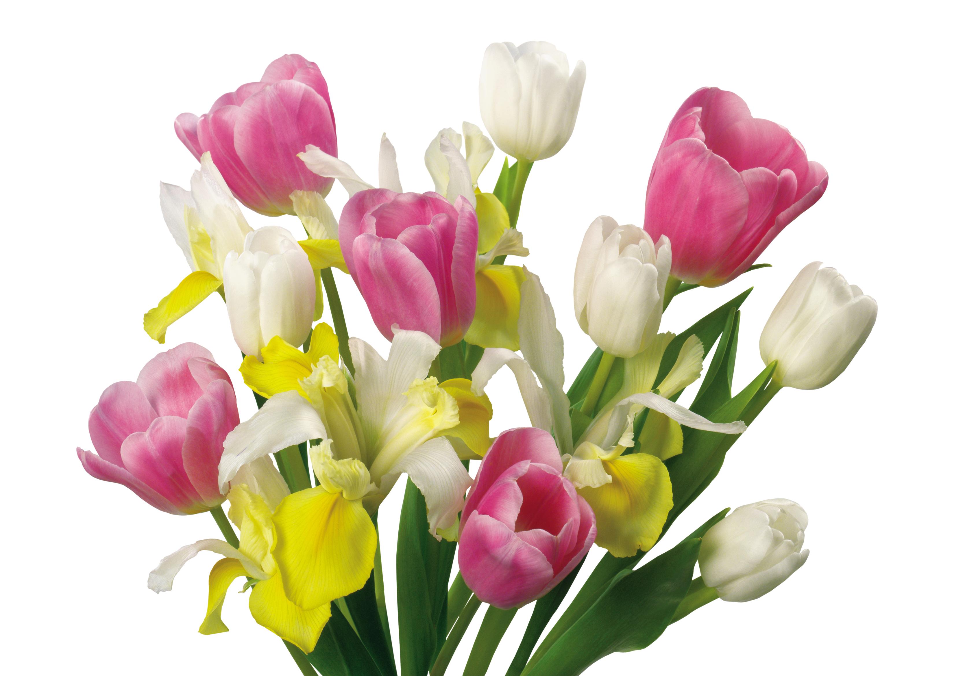 Картинки весенние цветы анимация, надписью тома