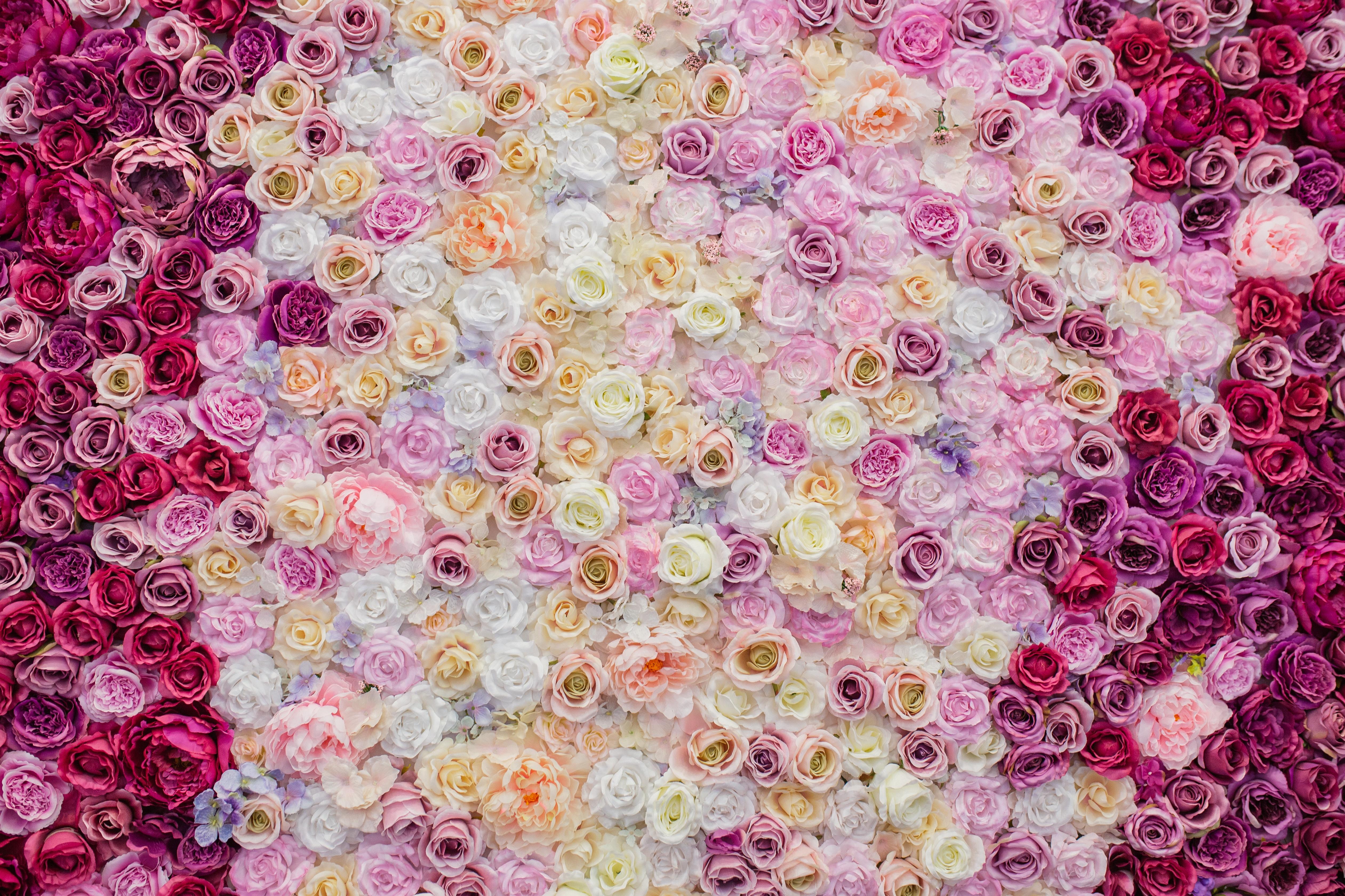 картинки где много розы каждого них