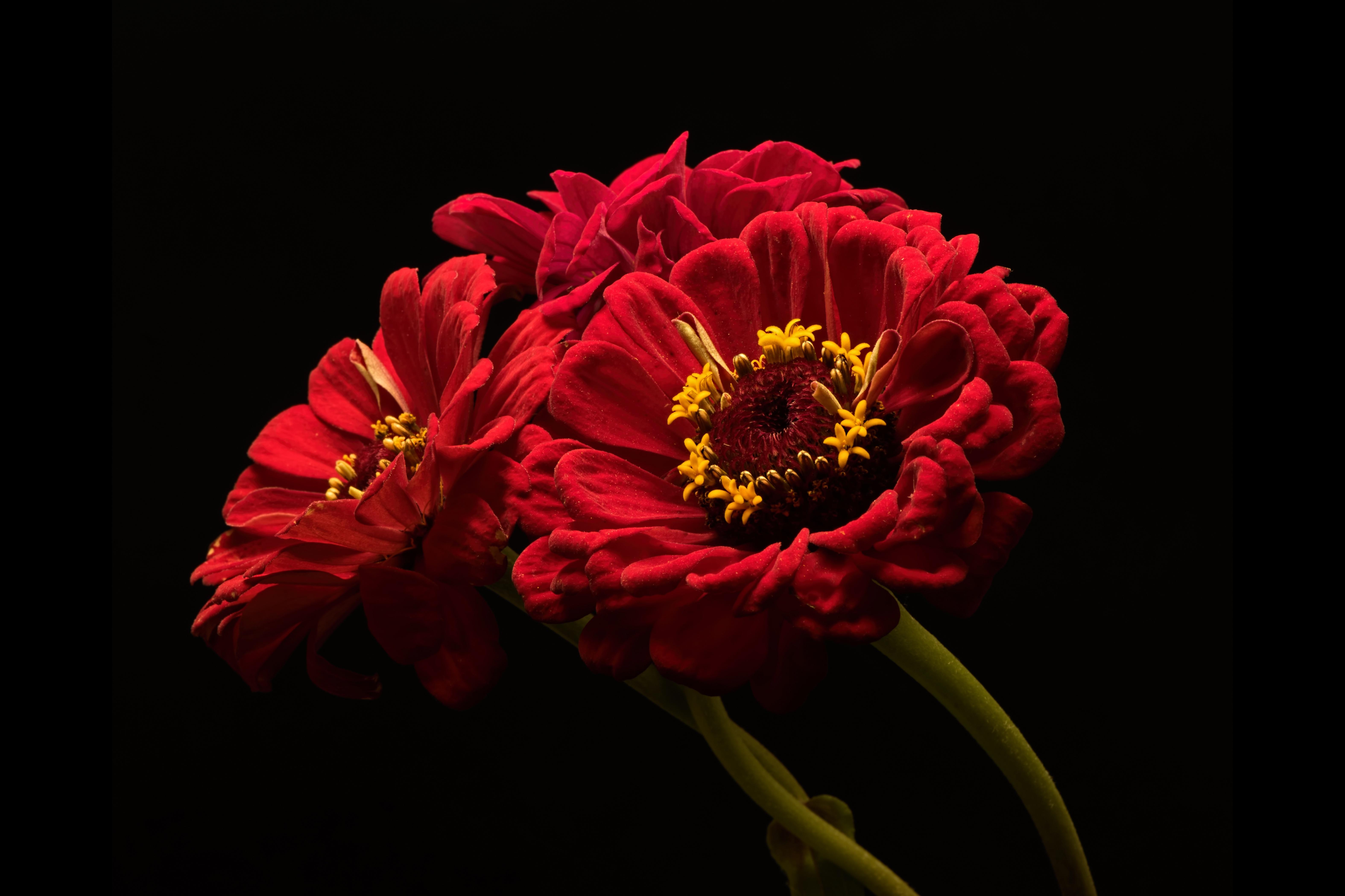 Картинка три цветка на черном фоне нашли сети