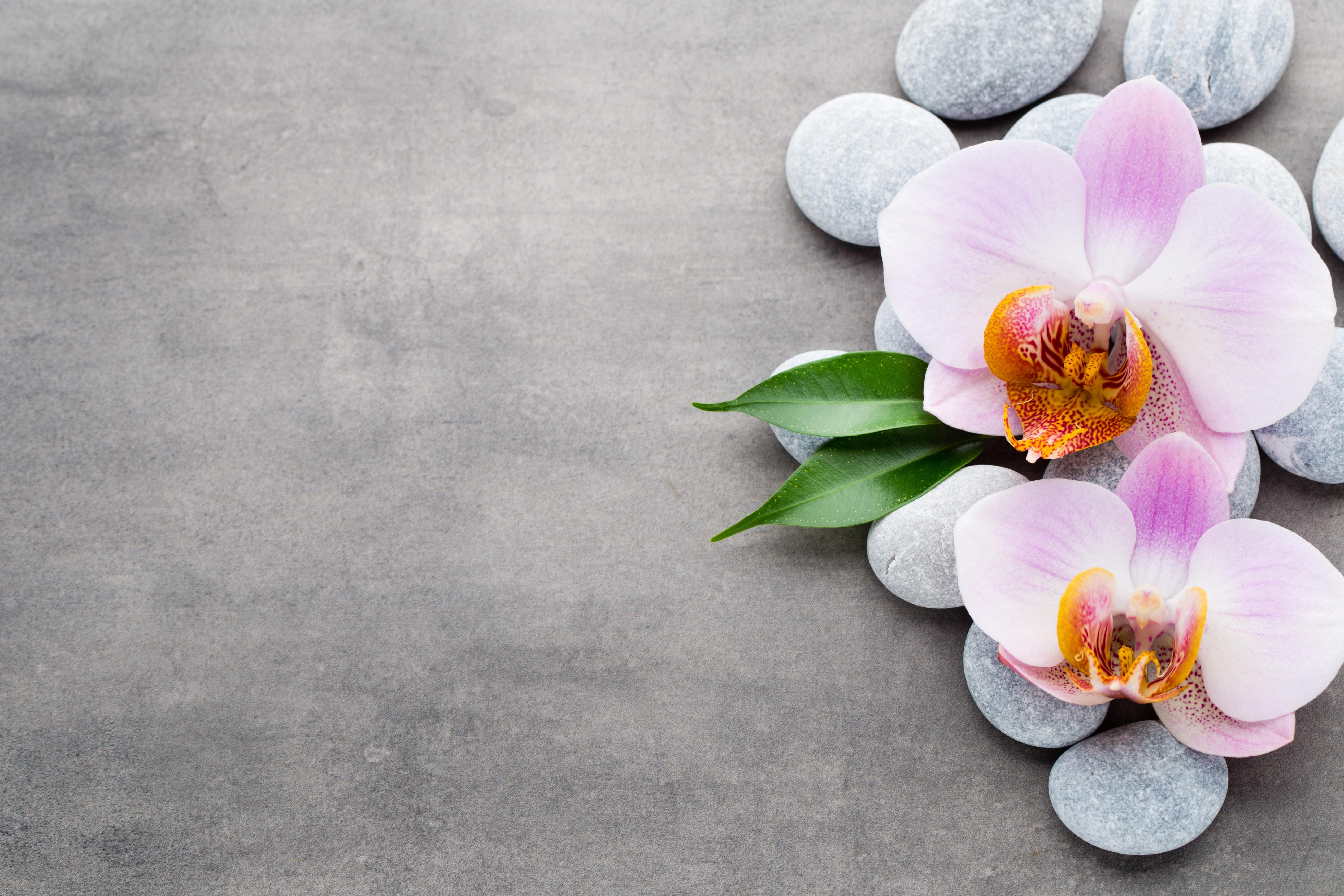 Картинки на рабочий стол орхидеи на камнях