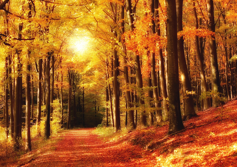 Красивые картинки леса осеннего природе
