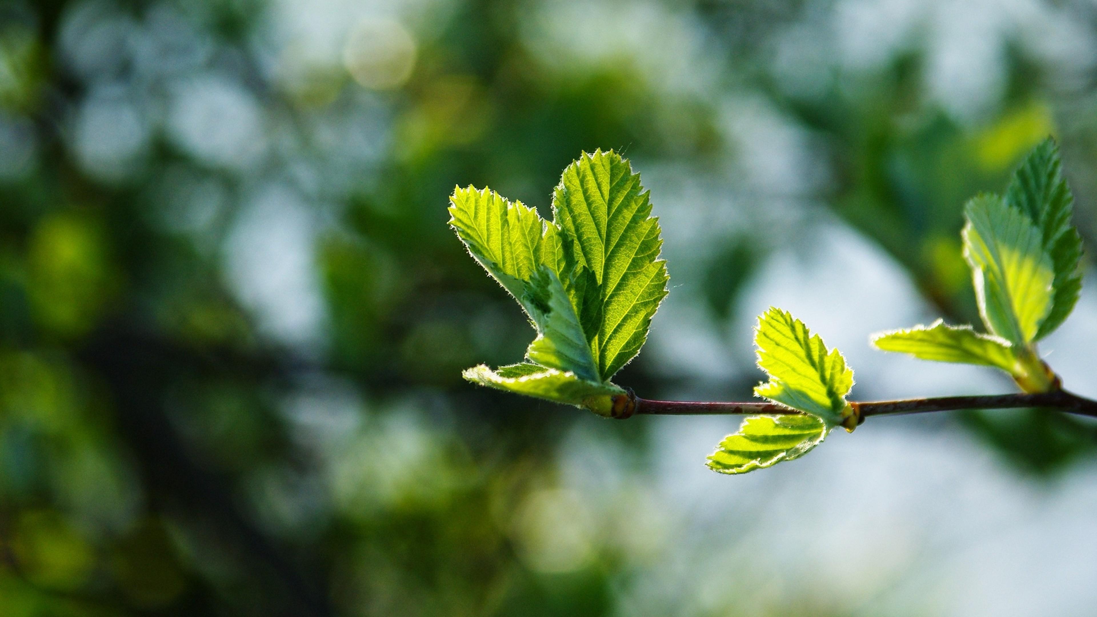 Картинки листьев весенних