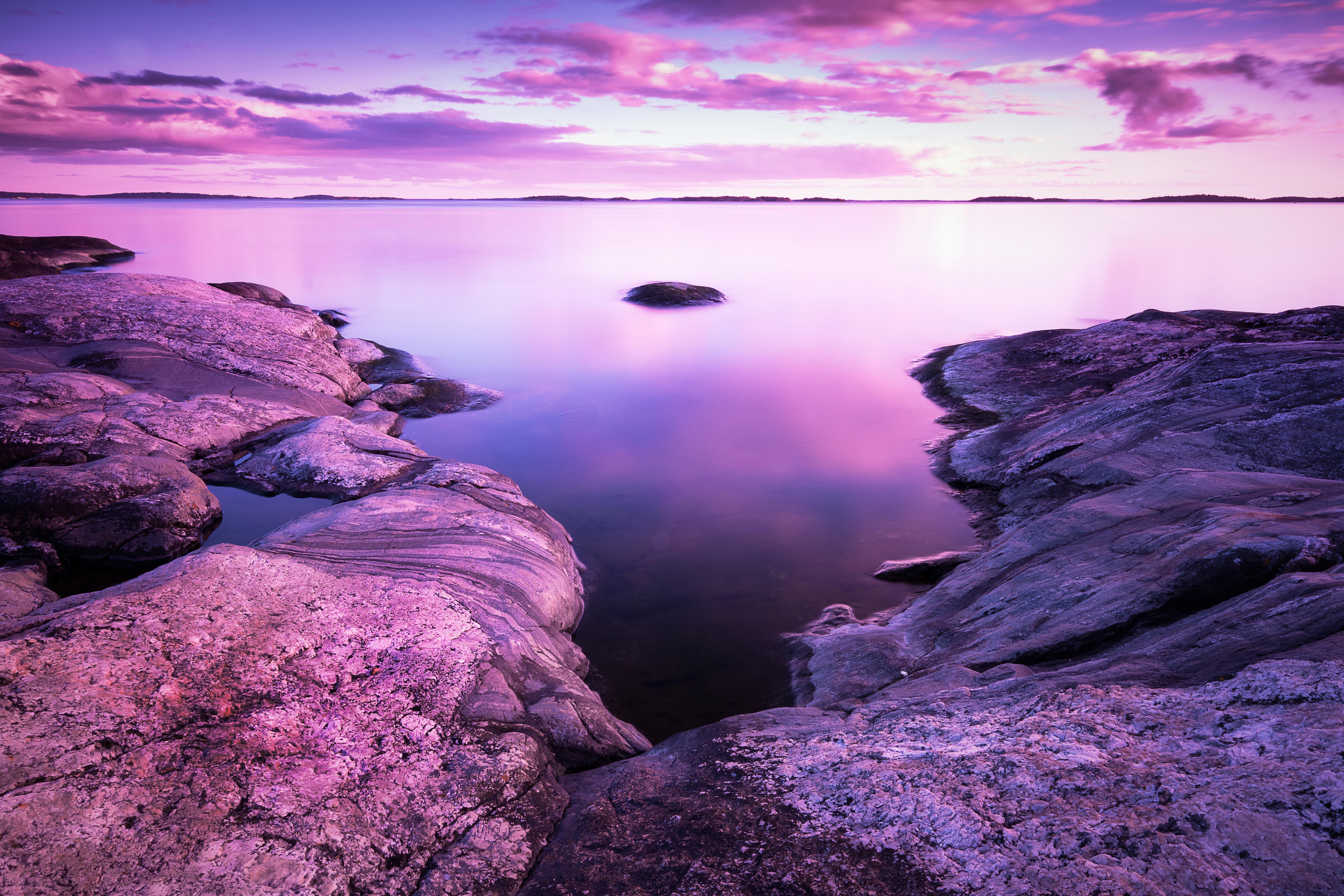 них море фиолетовых цветов картинки готическом стиле заостренные