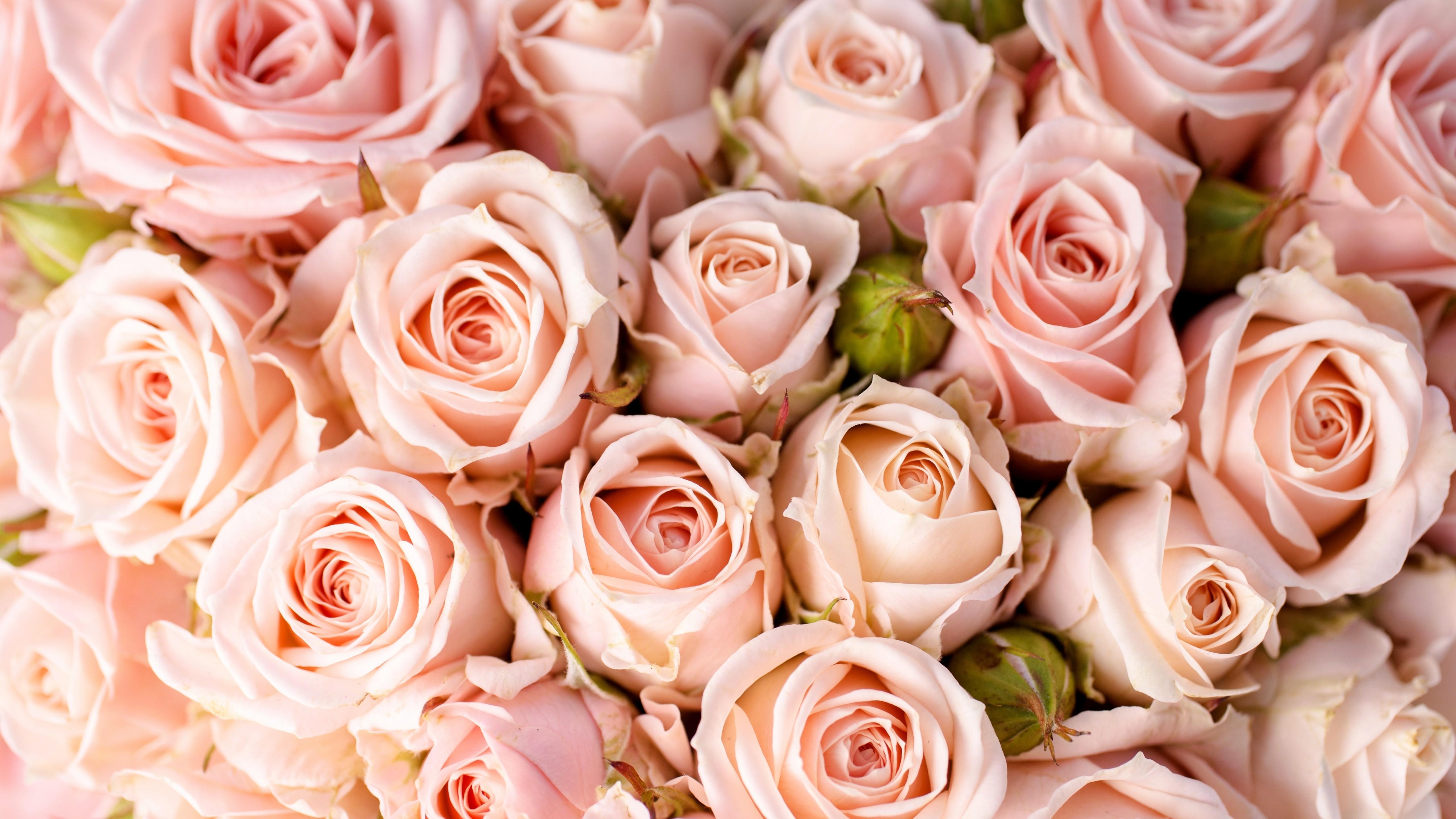 исчезли красивые картинки розы фотообои для рабочего стола страшно, что жизнь