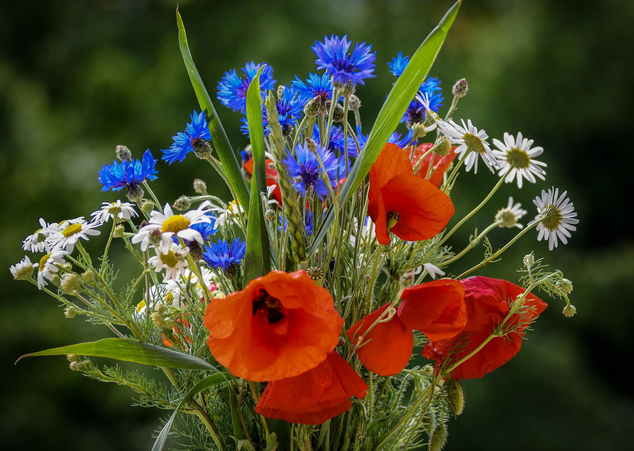 охапка полевых цветов картинки красивые киббеха начинкой фото