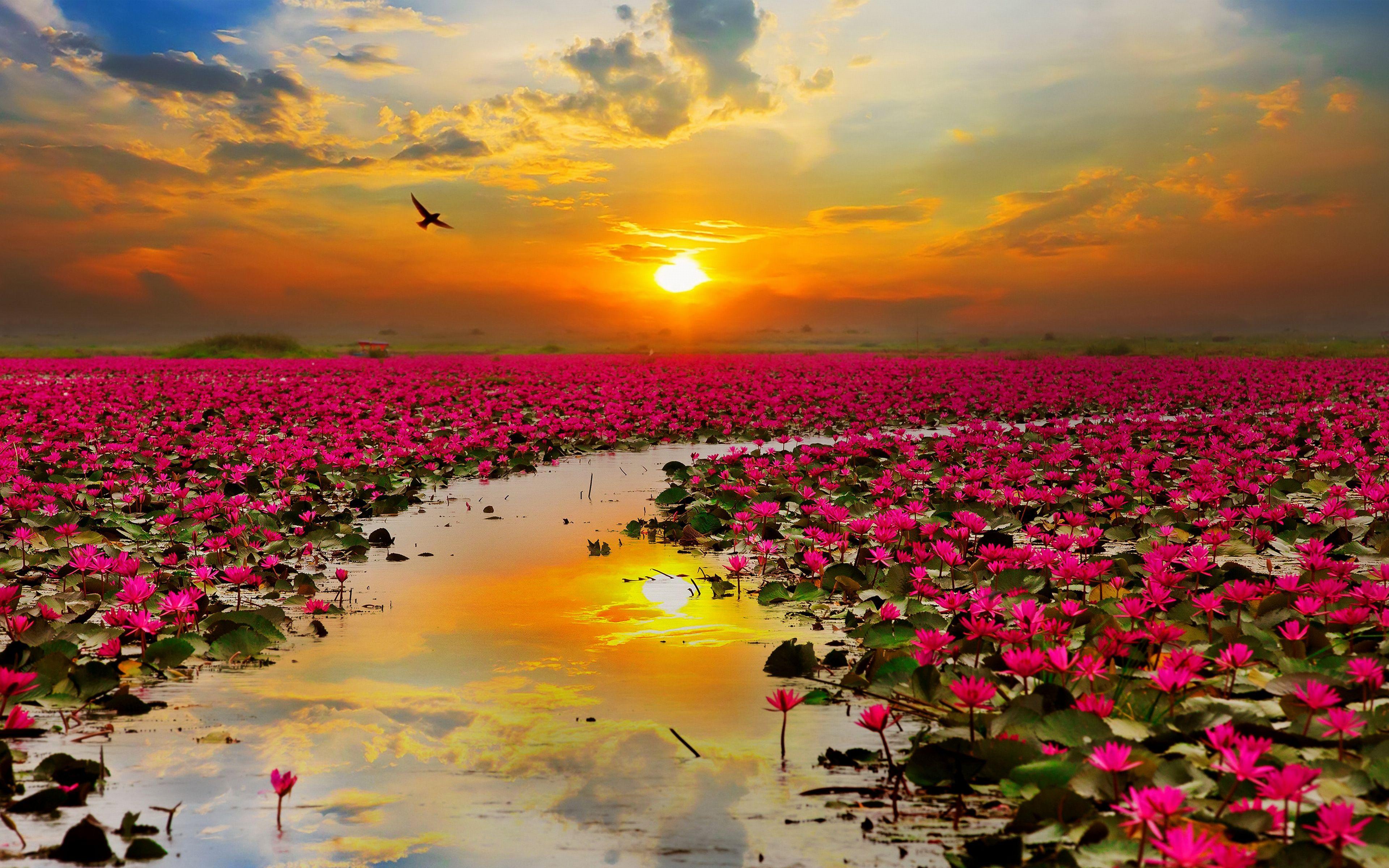 самые красивые фото моря и цветов